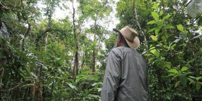 grow-a-rainforest-11488082-3x2-940x627
