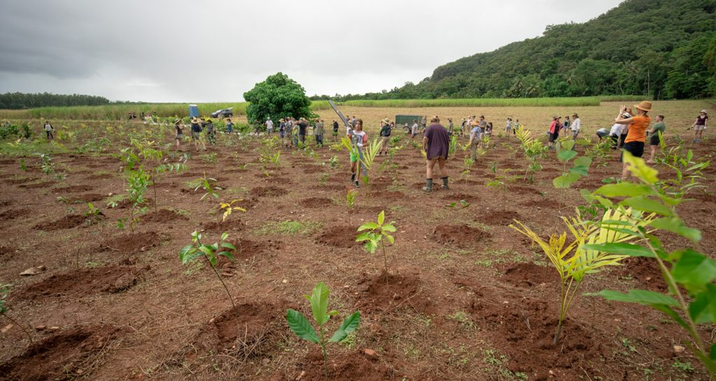 Planting trees at NightWings to restore the Daintree