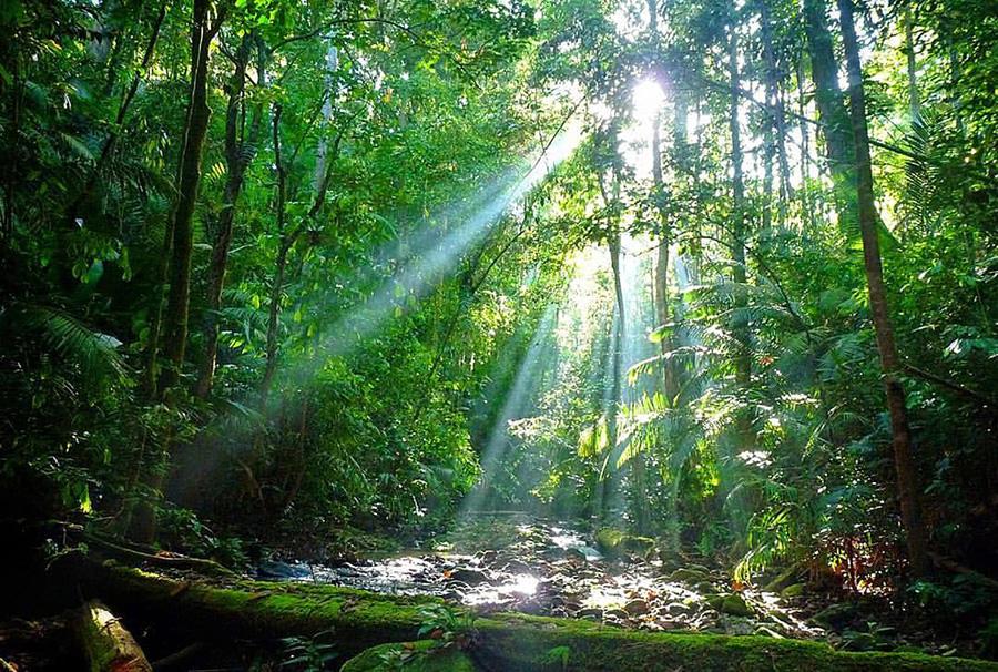 web-light-dta_rainforest