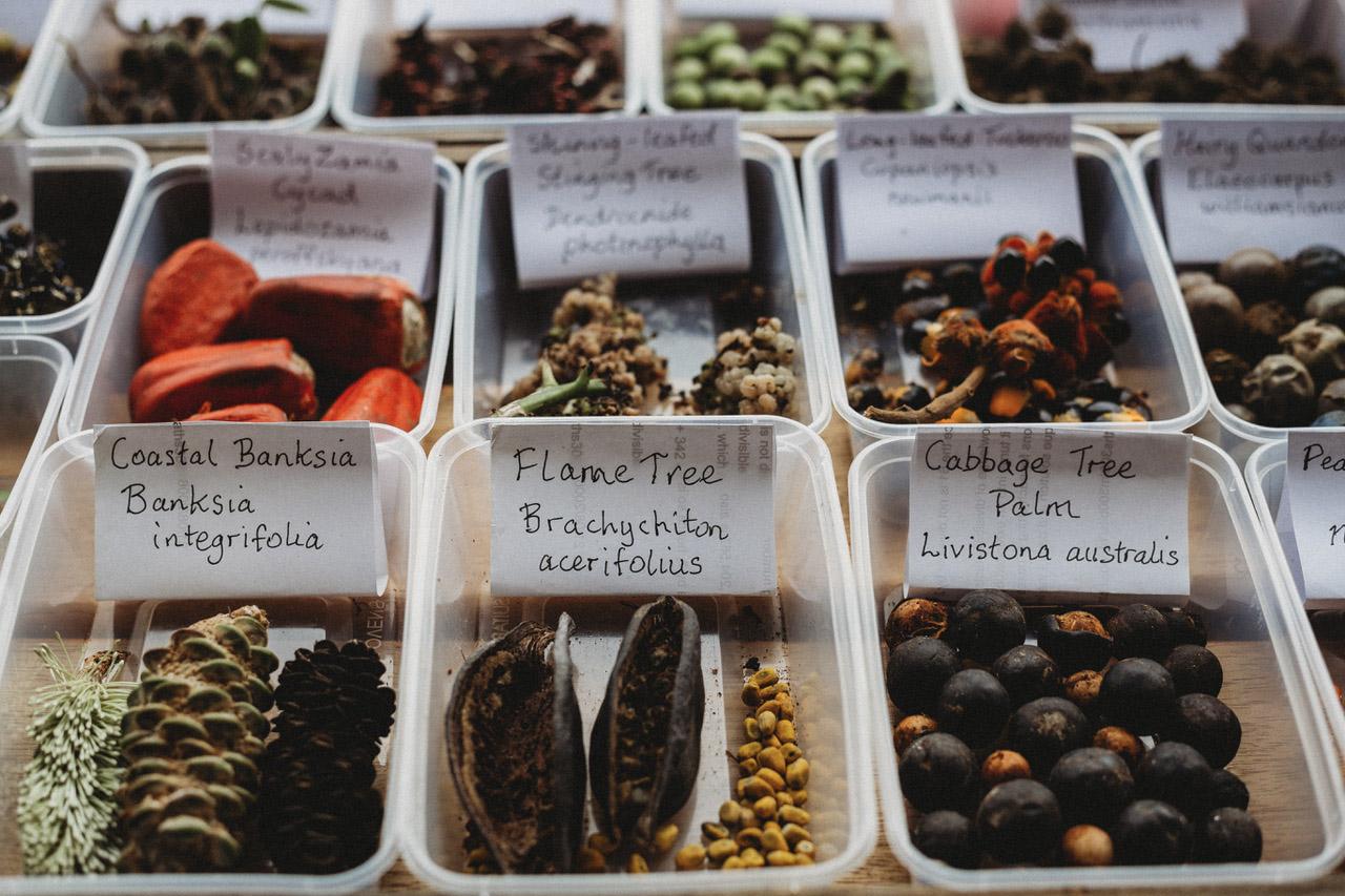 rainforest nursery seeds