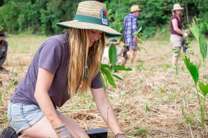 Plant A Rainforest - Trees Are The Answer