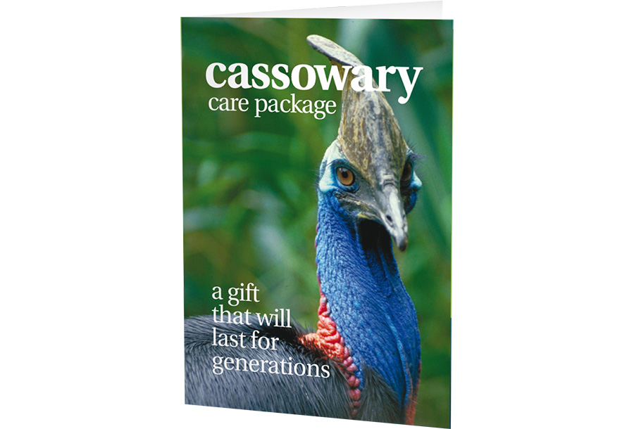 cassowary-card-no-background