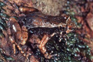 wet tropics biodiversity