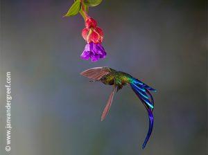 hummingbird cloud forest