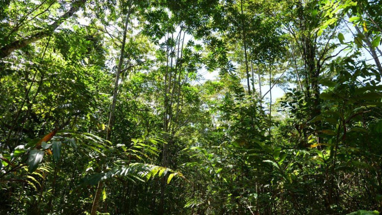 Growing a Rainforest