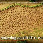 Growing a Rainforest FIlm