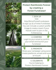 Forest Fundraiser