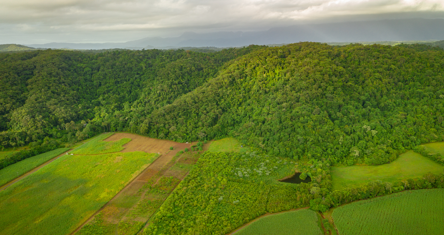 Aerial Image of NightWings Rainforest Centre - International Day of Forests Planting