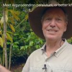 Fast Facts with Dr Robert Kooyman - The Booyong