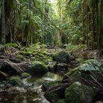 Big Scrub Rainforest Day 2020 Copyright Ian Stych