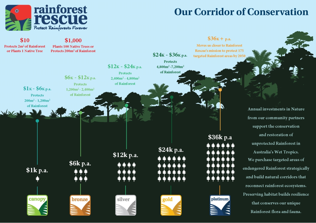 Rainforest Rescue Partnerships for Protection