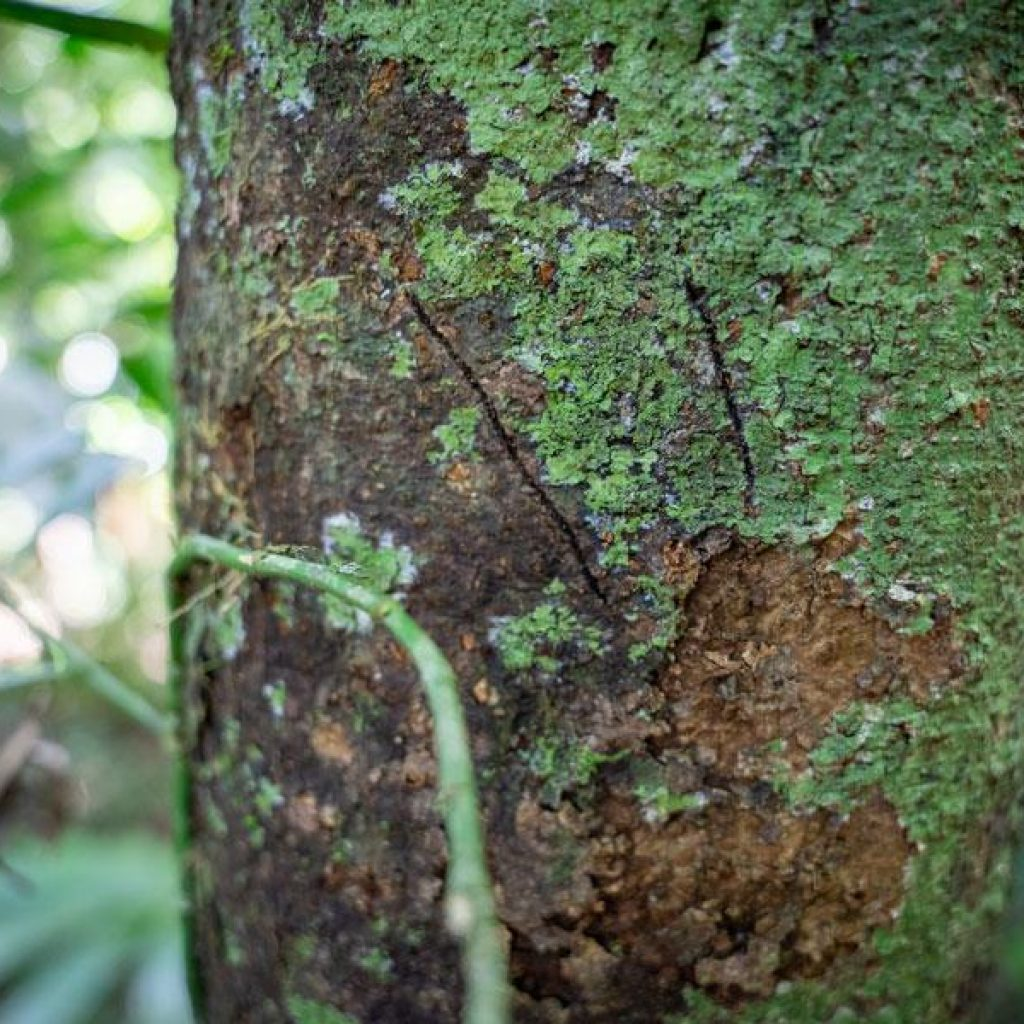 Tree Kangaroo Markings at Lot 18