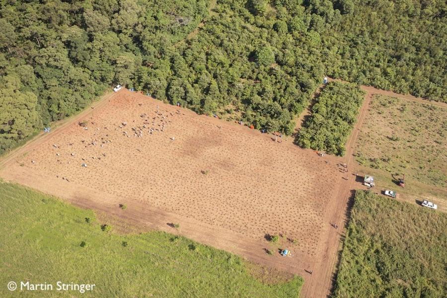 2021 Tree Planting at NightWings