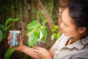Ecofiesta Birdwing Butterfly Vines Martin Stringer Photography